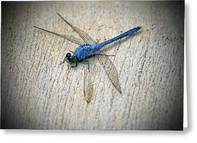 Dragonfly Greeting Card by Jean Haynes
