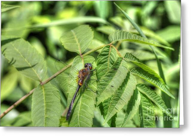 Dragonfly Greeting Card by Jimmy Ostgard