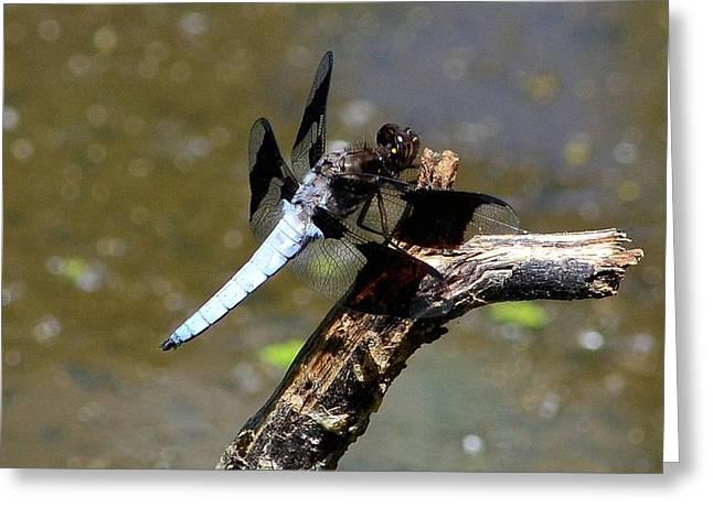 Dragonfly Greeting Card by Kathy Eickenberg