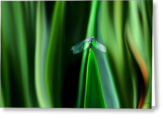 Transformative Art Greeting Cards - Dragonfly Meditation Greeting Card by Lisa Redfern