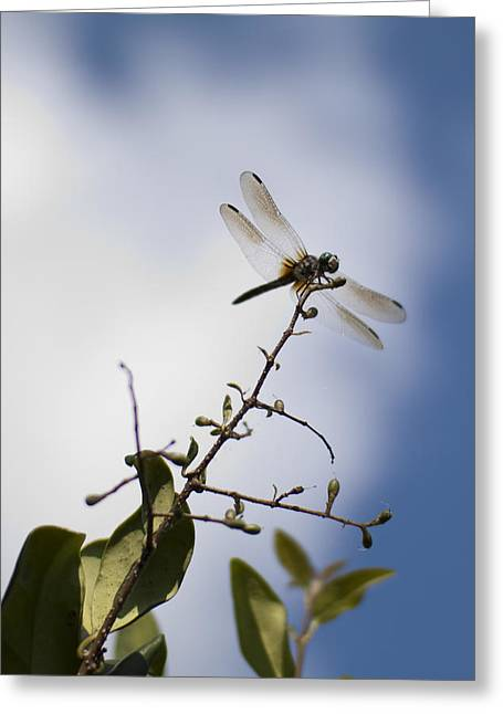 Dragonfly On A Limb Greeting Card by Dustin K Ryan