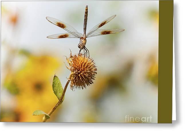 Dragonfly On Dead Bud Greeting Card