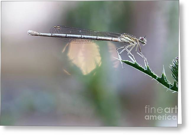 Greeting Card featuring the photograph Dragonfly On Leaf by Michal Boubin