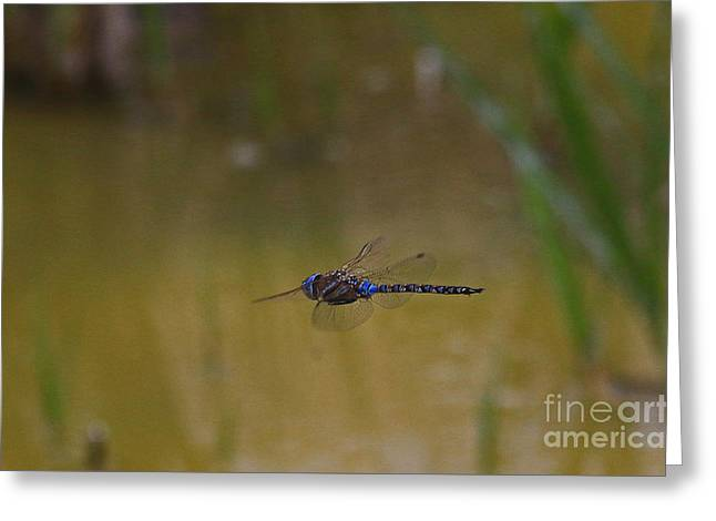 Dragonfly On The Fly Greeting Card by Craig Corwin