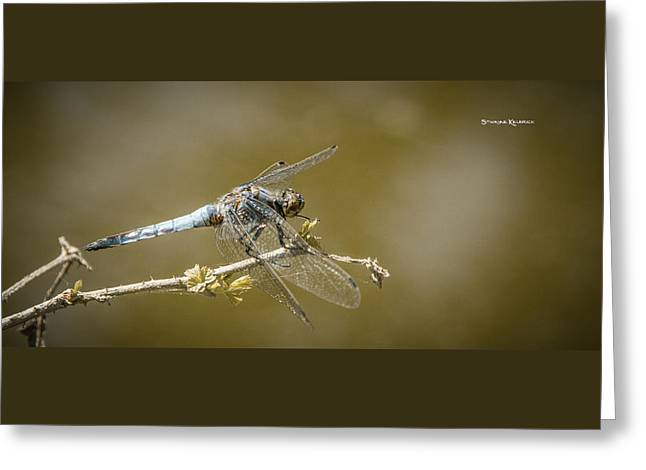 Greeting Card featuring the photograph Dragonfly On The Spot by Stwayne Keubrick