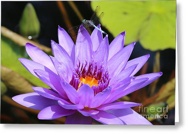 Dragonfly On Water Lily Greeting Card by Carol Groenen