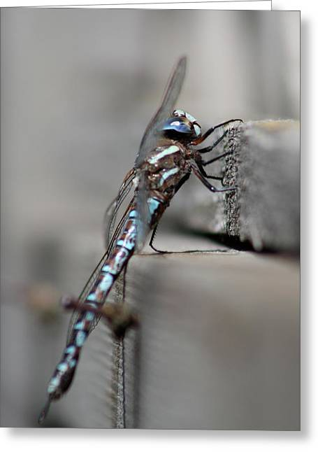 Greeting Card featuring the photograph Dragonfly Pause by Cathie Douglas