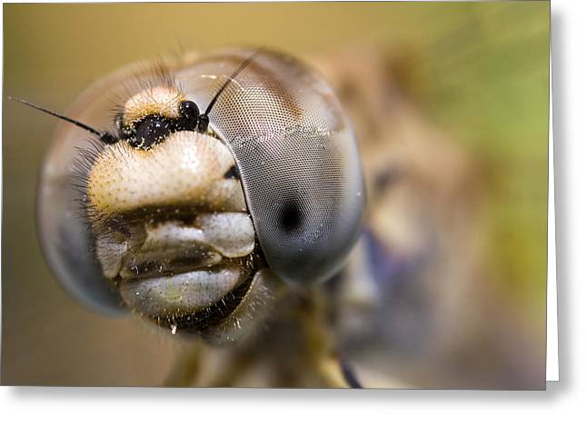 Dragonfly Portrait Greeting Card by Andre Goncalves