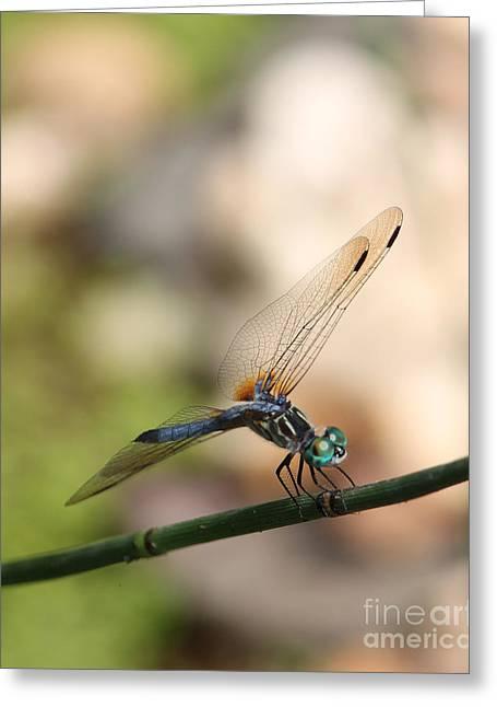 Dragonfly Ref.13 Greeting Card by Robert Sander