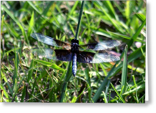 Dragonfly Resting Greeting Card by D Winston
