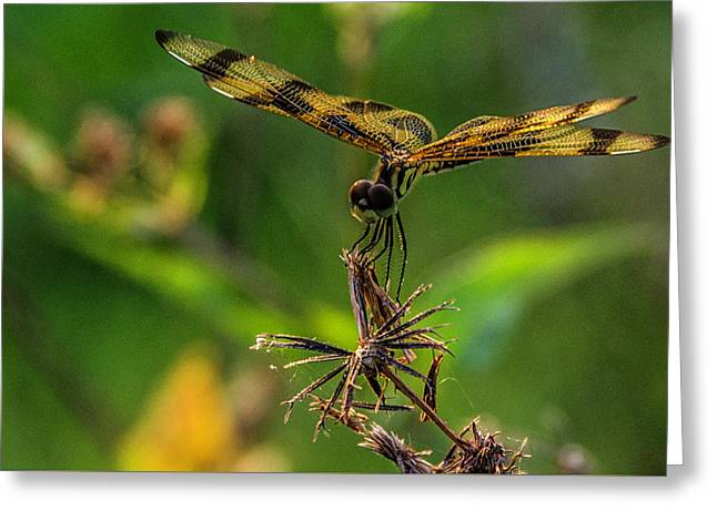 Dragonfly Resting On Flower Greeting Card