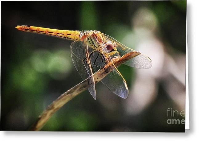 Dragonfly Resting Greeting Card by Stephan Grixti