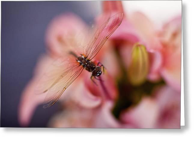 Dragonfly Serenity Greeting Card