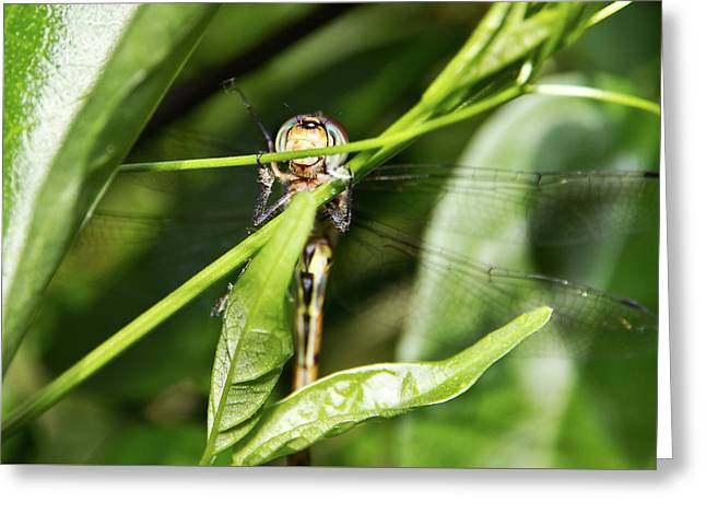 Dragonfly Smiles Greeting Card