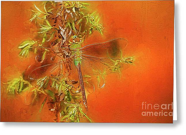 Dragonfly Greeting Card by Suzanne Handel