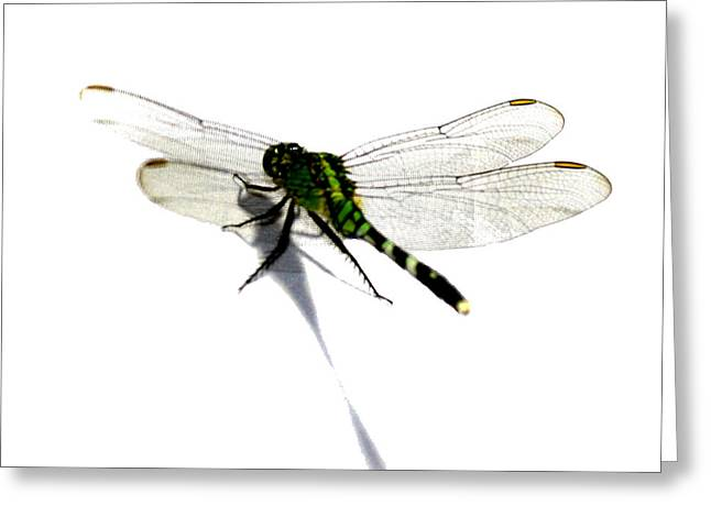 Dragonfly Greeting Card by Tbone Oliver