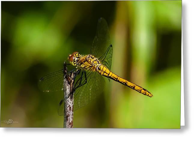 Dragonfly Greeting Card by Torbjorn Swenelius