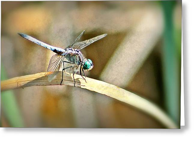 Dragonfly Greeting Card by Xpressions Of Creation