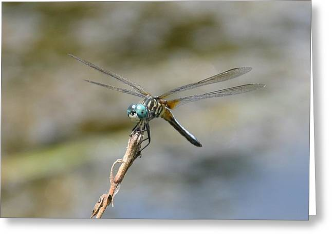 Dragonfly4 Greeting Card