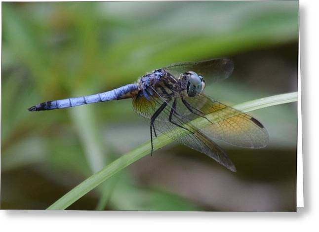 Dragonfly5 Greeting Card