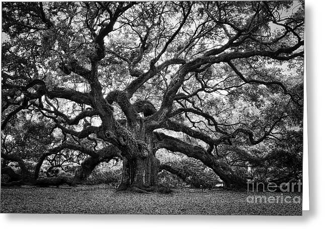 Dramatic Angel Oak In Black And White Greeting Card