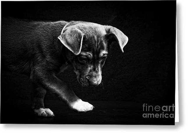 Dramatic Black And White Puppy Dog Greeting Card by Edward Fielding