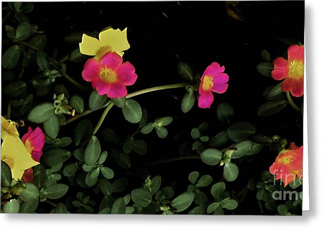 Dramatic Colorful Flowers Greeting Card