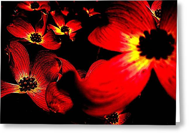 Digitalized Photograph Greeting Cards - Dramatic Dogwood Greeting Card by Beth Akerman