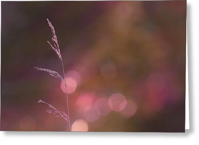 Dream It... Believe It Greeting Card by Aimelle
