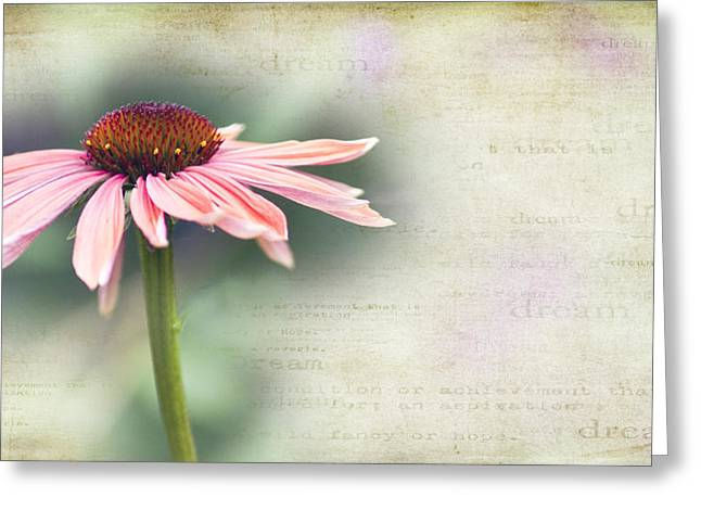 Cone Flowers Greeting Cards - Dream Greeting Card by Rebecca Cozart