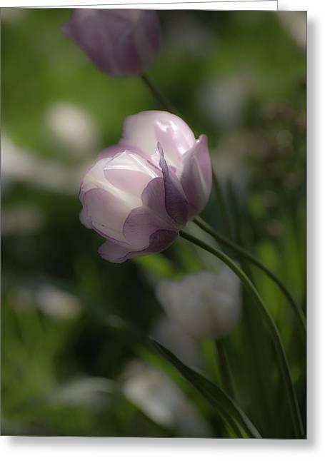 Dream Tulip Greeting Card