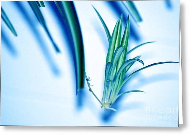 Greeting Card featuring the photograph Dreaming Abstract Today by Susanne Van Hulst