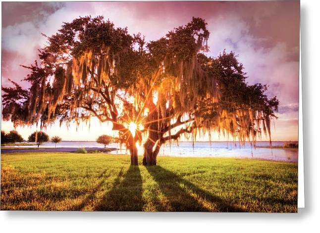 Dreaming At Sunrise Greeting Card by Debra and Dave Vanderlaan