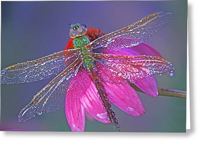 Dew Covered Flower Greeting Cards - Dreaming Dragon Greeting Card by Bill Morgenstern