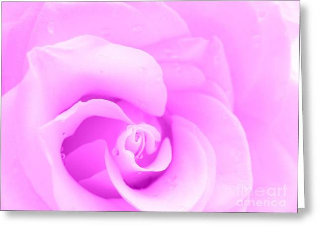 Dreaming In Lavender Greeting Card