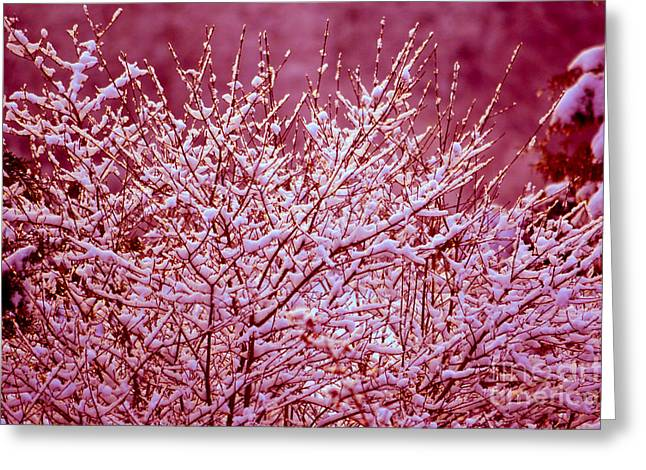 Greeting Card featuring the photograph Dreaming In Red - Winter Wonderland by Susanne Van Hulst
