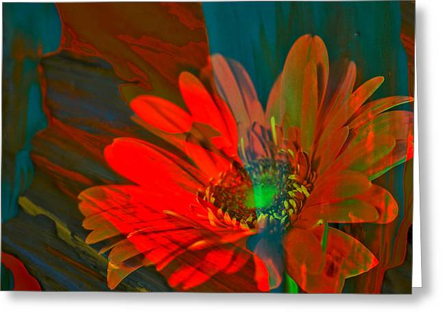 Greeting Card featuring the photograph Dreaming Of Flowers by Jeff Swan