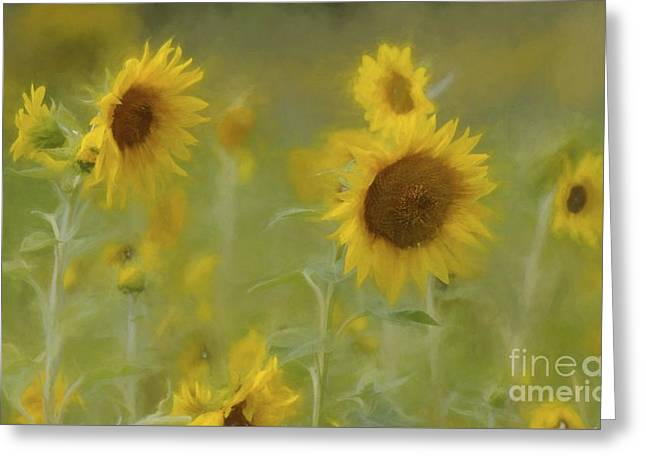 Greeting Card featuring the photograph Dreaming Of Sunflowers by Benanne Stiens