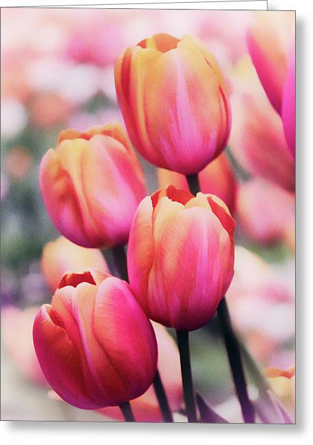Dreaming Tulips Greeting Card by Jessica Jenney