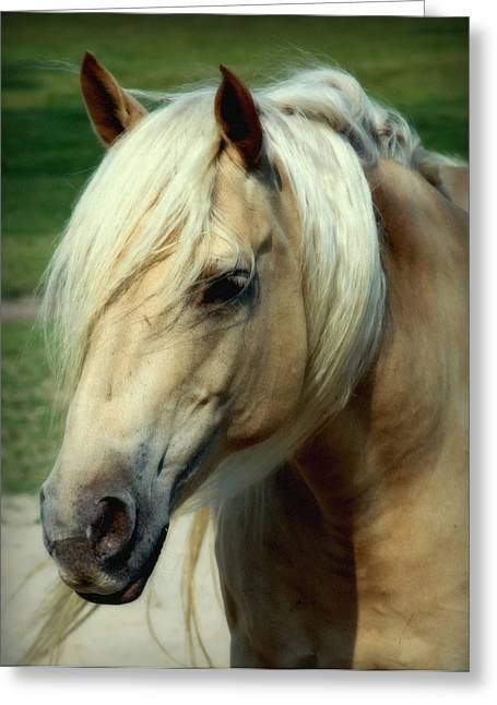 Horse Barn Greeting Cards - Dreams of Honey Greeting Card by Karen Wiles