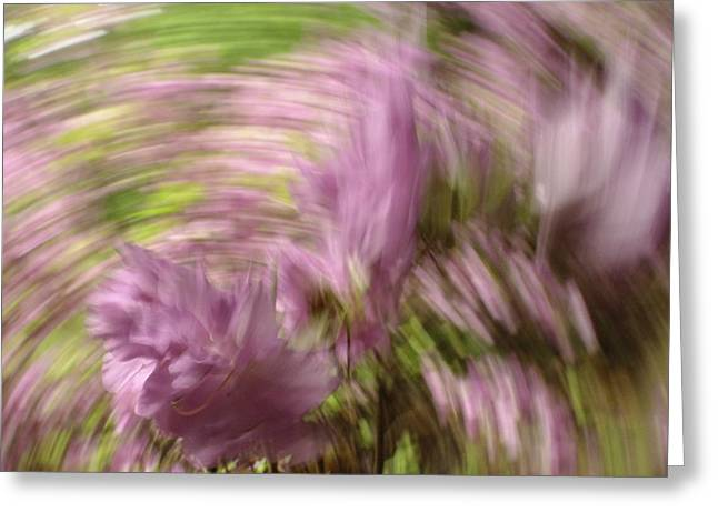 Greeting Card featuring the photograph Dreamy Azaleas by Bernhart Hochleitner