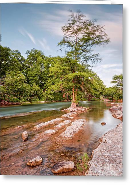Dreamy Bald Cypress At Guadalupe River - Canyon Lake Texas Hill Country Greeting Card by Silvio Ligutti