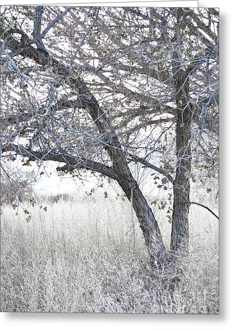 Greeting Card featuring the photograph Dreamy Bosque Tree by Andrea Hazel Ihlefeld