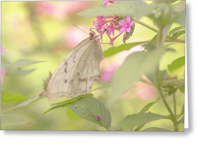Dreamy Butterfly Greeting Card