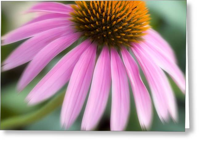 Dreamy Coneflower Greeting Card by Jeannie Burleson