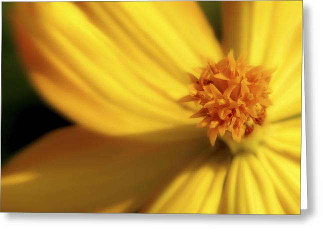 Dreamy Coreopsis Greeting Card by Jeannie Burleson