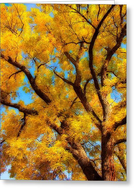 Dreamy Crisp Autumn Day Greeting Card by James BO  Insogna