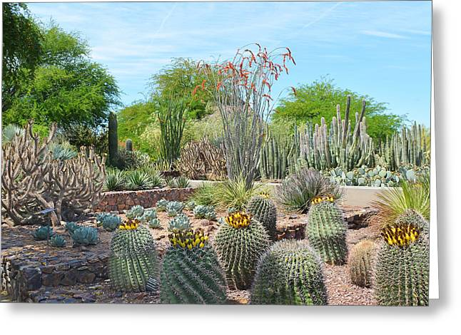 Dreamy Desert Cactus Greeting Card by Aimee L Maher Photography and Art Visit ALMGallerydotcom