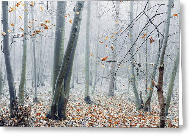 Dreamy Forest Greeting Card by Svetlana Sewell