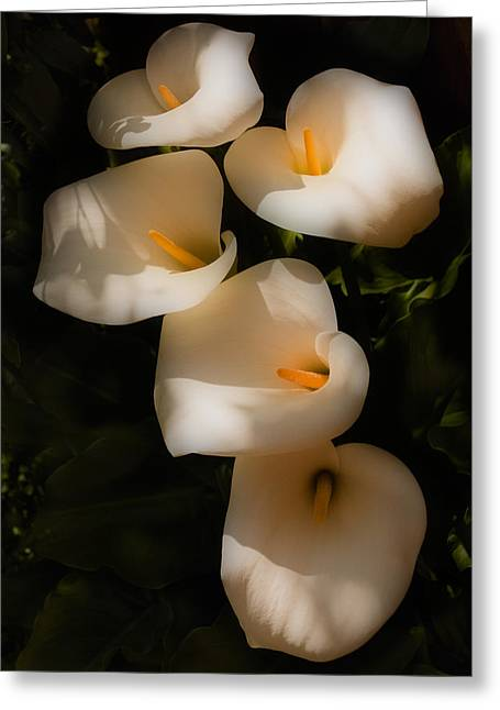 Dreamy Lilies Greeting Card by Mick Burkey